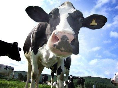Business Advice for Dairy Managers and Dairy Farmers