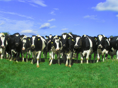 Dairy Farm Managers - Help with dairy farm management