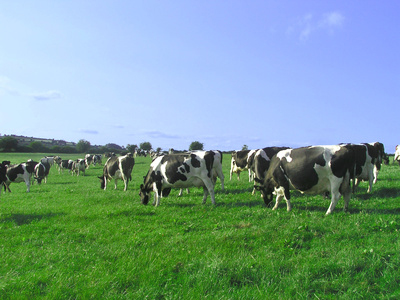 Help to increase profits from quality dairy feed and best grazing practices for dairy farmers